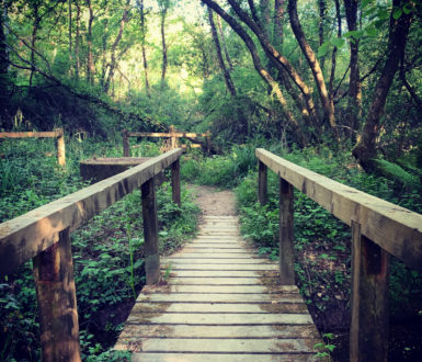 Walks and Trails Page