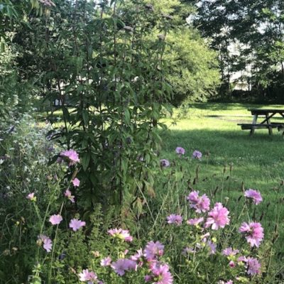 Spring Flowers And Picnic Bench At Culver Green Copy - Click to open full size image