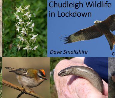 Chudleigh Wildlife In Lockdown