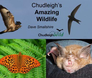 Chudleigh's Amazing Wildlife